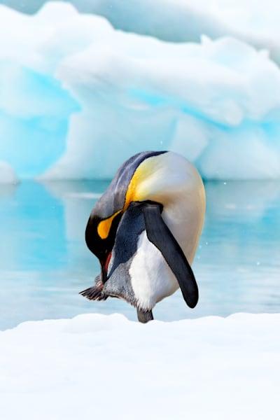 penguins-096