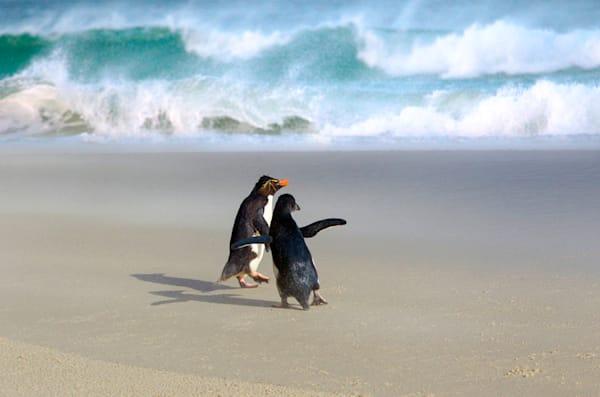 penguins-099