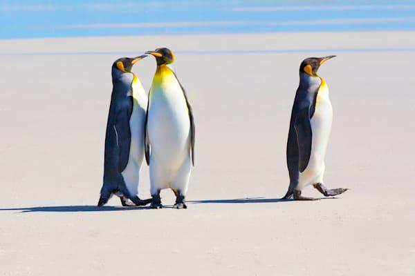 penguins-100