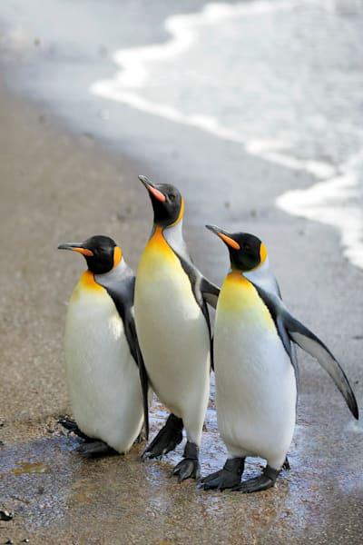 penguins-098