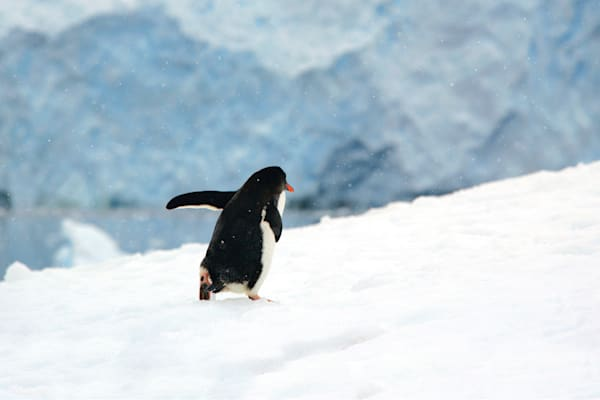penguins-101