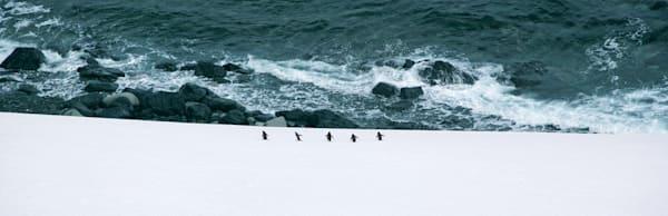 penguins-107