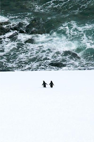 Penguins 103 Photography Art | Cheng Yan Studio