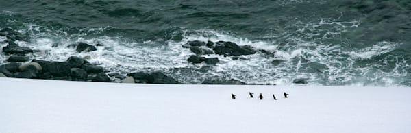 Penguins 109 Photography Art | Cheng Yan Studio