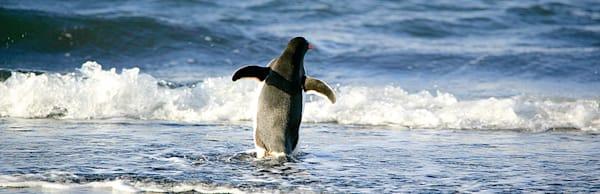 Penguins 113 Photography Art | Cheng Yan Studio