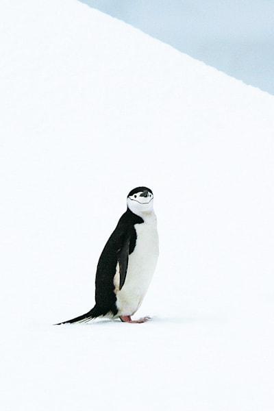 Penguins 122 Photography Art | Cheng Yan Studio