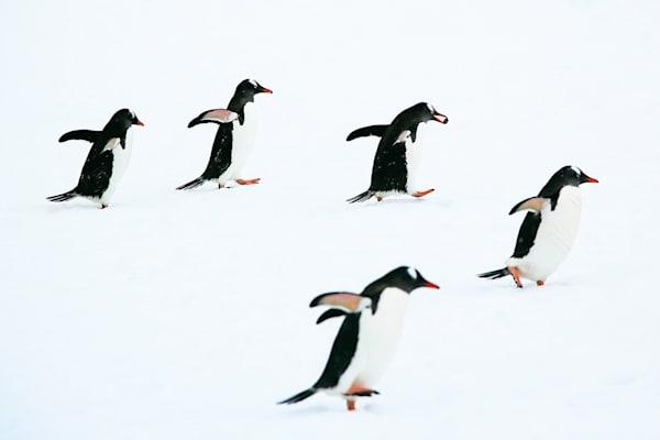 penguins-123
