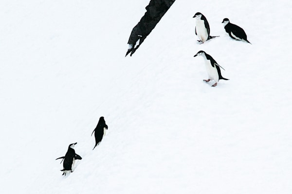 penguins-120