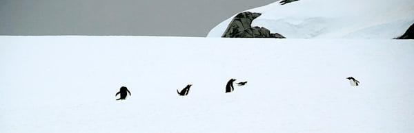 penguins-125