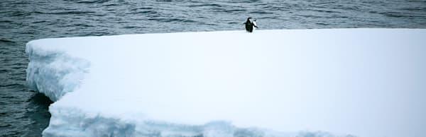 penguins-126