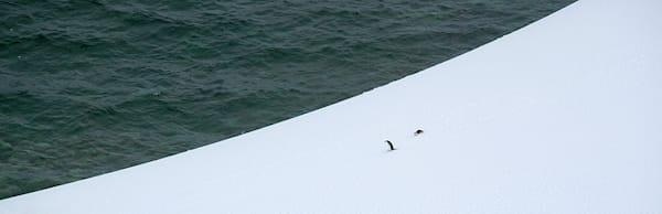 penguins-130