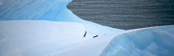 penguins-132