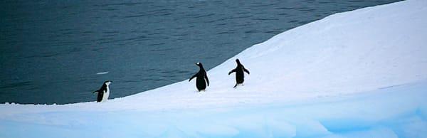 penguins-131
