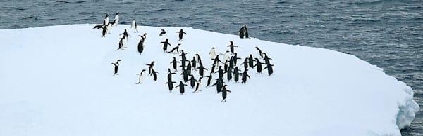 penguins-140