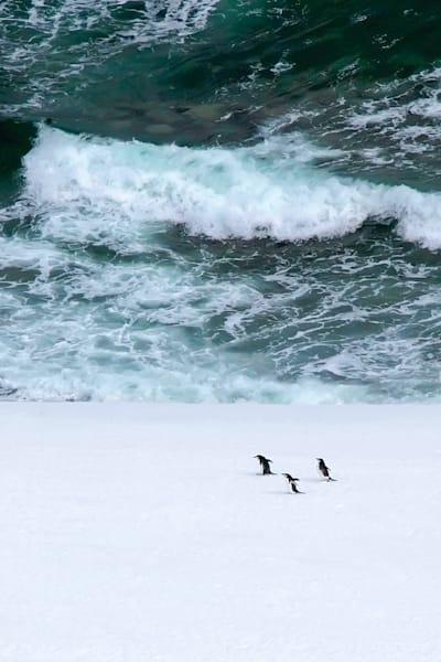 Penguins 143 Photography Art   Cheng Yan Studio