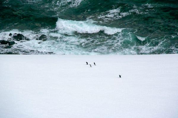 Penguins 142 Photography Art   Cheng Yan Studio
