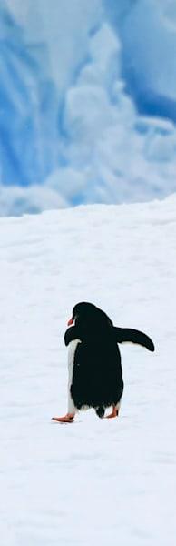 Penguins 159 Photography Art | Cheng Yan Studio
