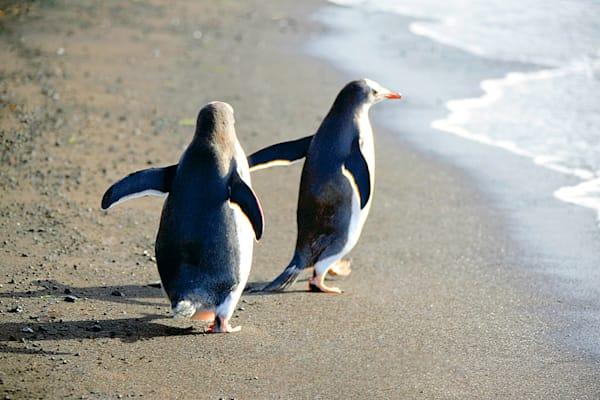 Penguins 154 Photography Art | Cheng Yan Studio