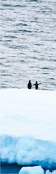 Penguins 160 Photography Art | Cheng Yan Studio