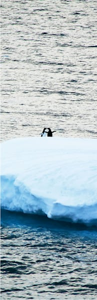 penguins-161