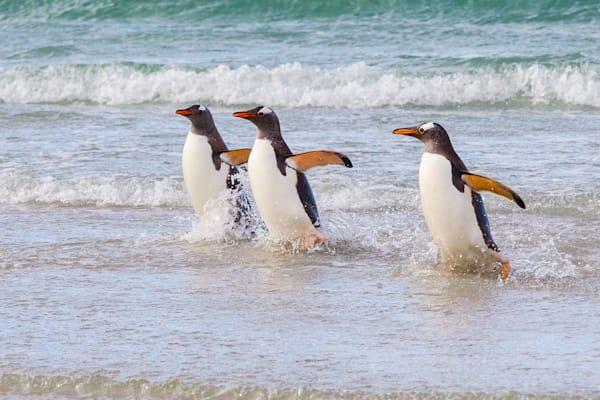 penguins-072
