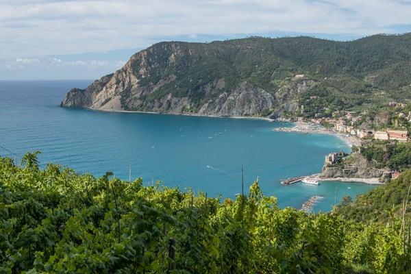 Monterosso Vinyard Lookout Print