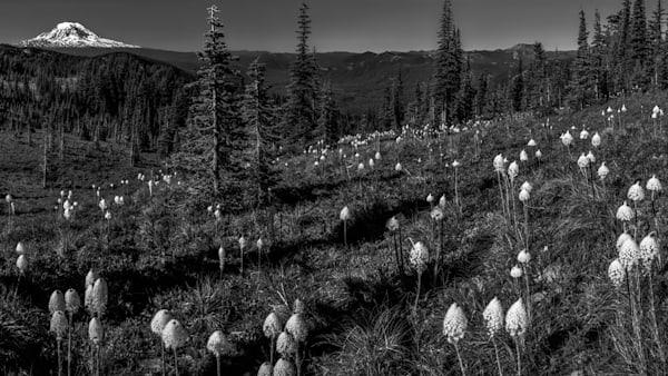 Beargrass, Adams, & St. Helens Photography Art | Scott Cordner Photography