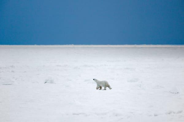 polar-bears-006