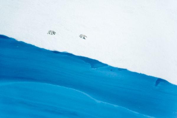 polar-bears-007