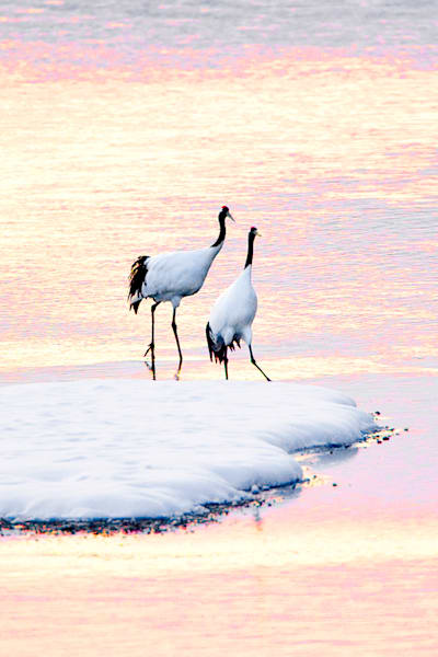 red-crowned-cranes-011