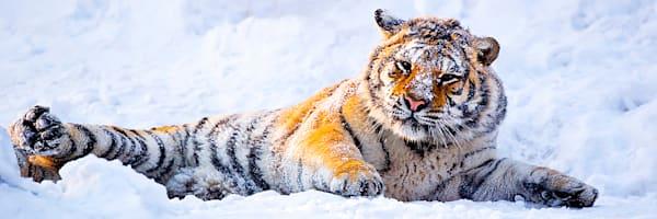 Tigers 019 Photography Art | Cheng Yan Studio