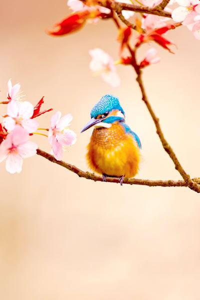 kingfishers-038