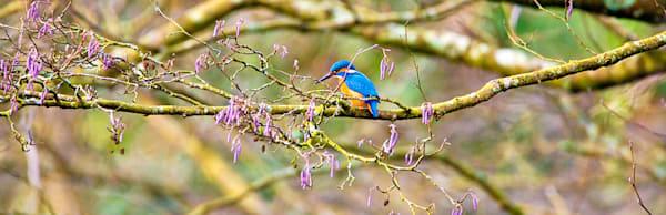 Kingfishers 060 Photography Art | Cheng Yan Studio
