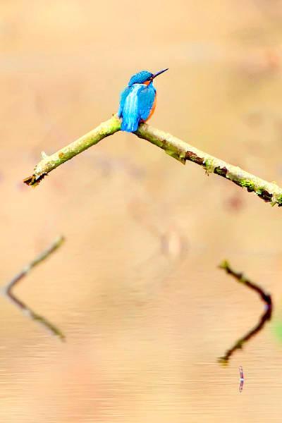 Kingfishers 063 Photography Art | Cheng Yan Studio