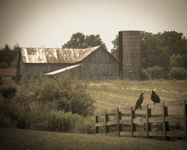 Buzzard Barn Limited Edition Signed Fine Art Landscape Photograph by Melissa Fague