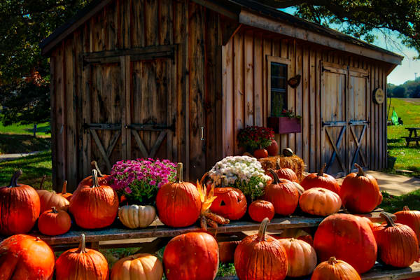 Pumpkins Fine Art Photograph | JustBob Images