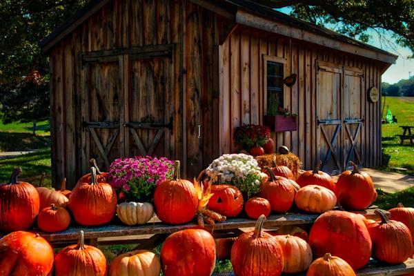 Pumpkins Fine Art Photograph | JustBob Images
