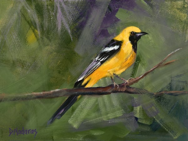 Oriole | Southwest Art Gallery Tucson | Madaras