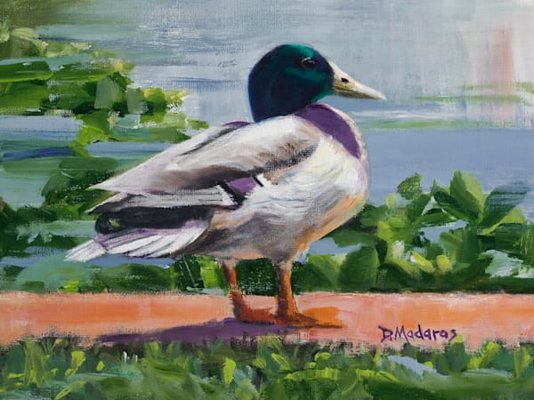 Portrait of a Mallard | Southwest Art Gallery Tucson