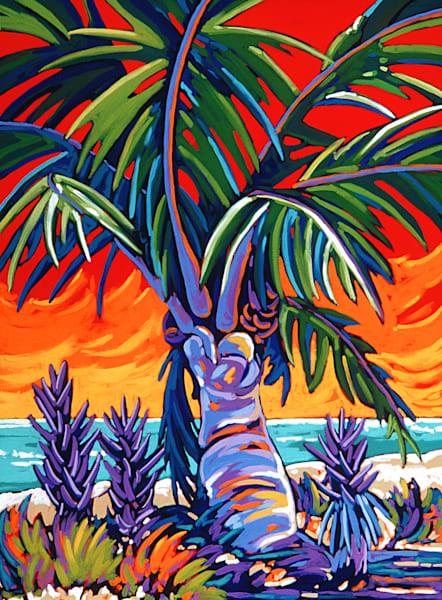 East Coast Coconut Palm Sunset