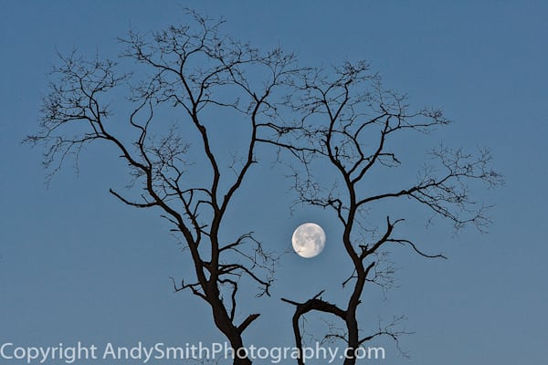 fine art photograph of Full moon setting in the early morning in Valley Forge Park