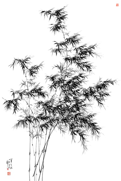 bamboo-005