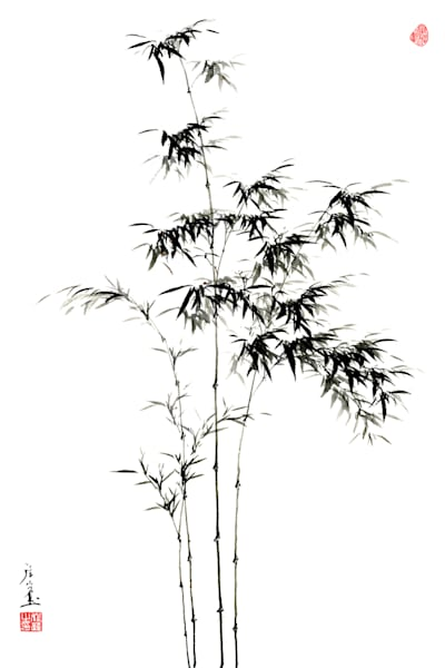 bamboo-004