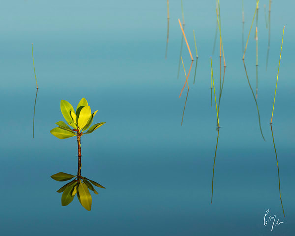 Constance Mier Photography from a Canoe - art in nature