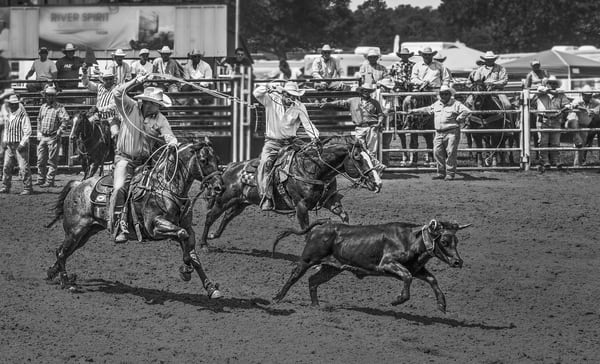 Rodeo Team Calf Roping Competition|Wall Decor fleblanc