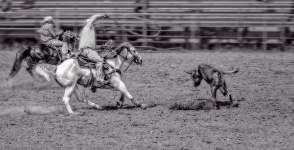 Rodeo Team Roping West Monochrome|Wall Decor fleblanc