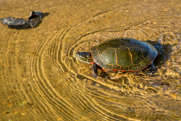 High Speed Turtle, Madison, Wisconsin, USA