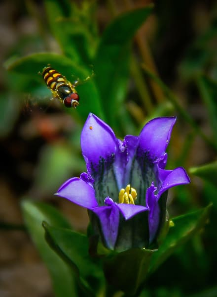 Flora Fauna Flowers Bees Insects