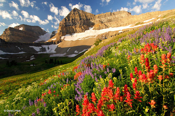 Wildflowers at Timpanogos