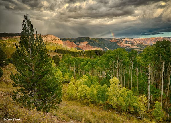Cedar Breaks in Rain